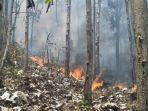 kebakaran-di-salah-satu-lokasi-kawasan-hutan-dan-lahan-di-kabupaten-trenggalek.jpg