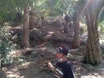kebun-sawit-di-desa-bandungrejo-kecamatan-bantur-kabupaten-malang-ilustrasi-kelapa-sawit.jpg