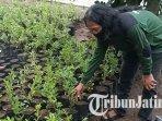 ketua-komunitas-oleng-oleng-kediri-heri-deka-menunjukkan-bibit-tanaman-yang-akan-ditanam-di-hutan.jpg
