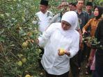 khofifah-saat-memetik-buah-apel-di-nongkojajar-pasuruan_20180302_165426.jpg