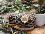 kokedama-seni-menghias-tanaman-ala-jepang-juga-bisa-diterapkan-di-indonesia.jpg