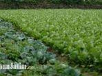 lahan-pertanian-di-desa-sumber-brantas-kota-batu.jpg