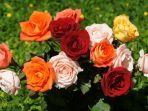 makna-warna-dari-bunga-mawar-putih-lambang-cinta-sejati.jpg