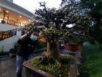 para-pecinta-tanaman-bonsai.jpg