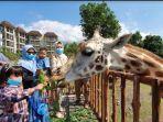para-pengunjung-baobab-safari-resort-saat-memberi-makan-koleksi-jerapah.jpg
