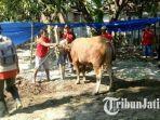 paramedis-kesehatan-hewan-dinas-pertanian-kabupaten-mojokerto.jpg