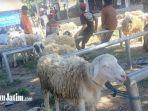 pasar-hewan-plaosan-di-desa-buluharjo.jpg