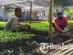pembibitan-cabai-di-polybag-yang-dilakukan-petani-di-kota-madiun-ilustrasi-tanaman-hortikultura.jpg
