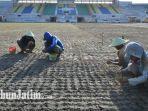 penanaman-rumput-di-stadion-tambaksari-surabaya.jpg