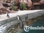 penguin-humboldt-di-eco-green-park_20171126_185800.jpg