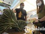 pengunjung-melihat-kaktus-berbentuk-unik-pada-exotic-plants-season-2-di-grand-city-mall-surabaya.jpg