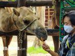 pengunjung-saat-menikmati-di-maharani-zoo-dan-goa-lamongan-pada-hari-libur-kedua-natal.jpg