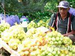 petani-apel-sedang-menjual-dagangannya-di-kota-batu.jpg