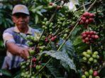 petani-kopi-di-kabupaten-malang-177.jpg