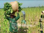 petani-tembakau-pamekasan-a.jpg