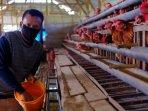 peternak-unggas-tuban-mendapatkan-pendampingan-semen-indonesia-sig.jpg