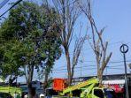petugas-dlhkp-kota-kediri-melakukan-pemotongan-pohon.jpg