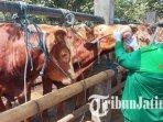petugas-memeriksa-kondisi-kesehatan-sapi-di-pasar-hewan-dimoro-kota-blitar-ilustrasi-hewan-kurban.jpg