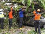 petugas-memotong-pohon-tumbang-yang-menimpa-mobil-di-jalan-trunojoyo-jember-pohon-tumbang-di-jember.jpg