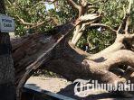 pohon-gada-di-halaman-istana-gebang-kota-blitar-roboh_20180926_112512.jpg