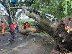 pohon-tumbang-yang-terjadi-di-jalan-mayjend-sungkono-kota-malang-ilustrasi-pohon-tumbang.jpg