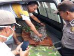 polisi-mengevakuasi-mayat-bayi-yang-ditemukan-di-saluran-air-di-kalisat.jpg