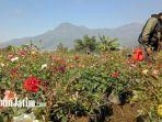 ppkm-darurat-petani-bunga-di-desa-sidomulyo.jpg