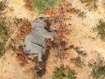 ratusan-gajah-di-botswana-mati-misterius.jpg