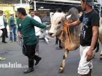 sapi-yang-akan-disembelih-di-halaman-gedung-perwakilan-bank-indonesia_20180822_093029.jpg
