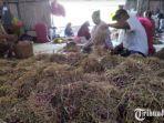sejumlah-pekerja-pitil-bawang-merah-hasil-panen-petani-sebelum-di-pasarkan-di-nganjuk.jpg