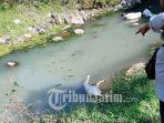 sungai-penuh-bangkai-di-kecamatan-lembeyan-kabupaten-magetan-airnya-dipakai-mandi-dan-cuci.jpg