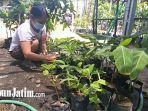 tanaman-bibit-porang-kebun-vista-agromedia-surabaya.jpg