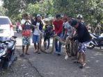 ular-piton-serang-lagi-warga-kelurahan-pallette-kecamatan-tanete-riattang-timur-watampone-bone_20170402_000247.jpg