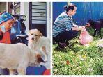 viral-dokter-hewan-selamatkan-200-anjing-liar.jpg