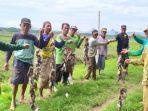 warga-desa-baruharjo-kecamatan-durenan-menunjukkan-hasil-tangkapan-tikus.jpg