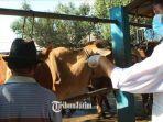 yasir-warga-kecamatan-mojo-kabupaten-kediri-saat-diwawancarai-di-pasar-hewan-ngadiluwih.jpg