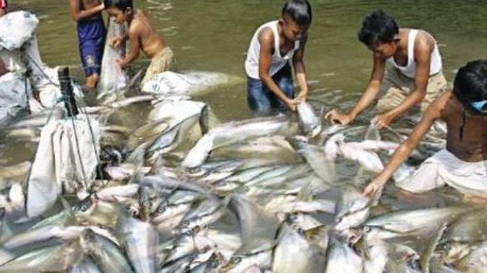 10 Arti Mimpi Mendapatkan Ikan Akan Mendapatkan Rezeki Nomplok Halaman All Tribun Jogja