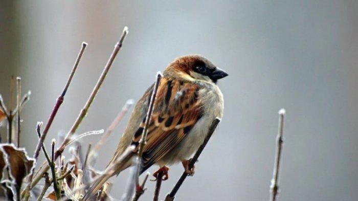 13 Arti Dan Tafsir Mimpi Mulai Melihat Hingga Menangkap Burung Halaman All Tribun Jogja