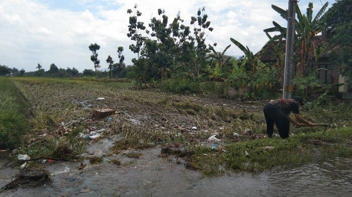 1.301 Hektare Sawah di Klaten Tergenang Air, DPKPP Besok Lakukan Monitoring