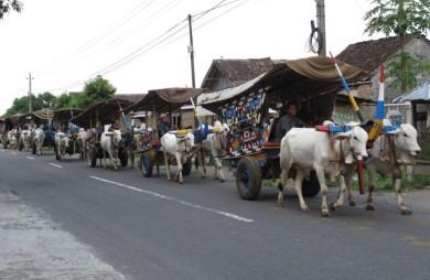 Festival Gerobak Sapi Minggu Besok di Maguwoharjo