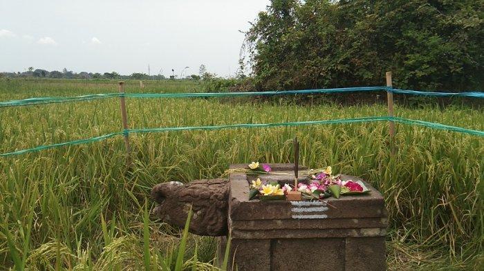 Ada Yoni Berkepala Kura-Kura di Klaten, Jalan Tol Yogyakarta-Solo Dibangun Melayang di Atasnya
