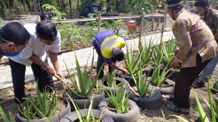 AgrowisataRoemah De Aloe Vera Banggan Kulon Progo,Sajikan Field Tripdan Ragam Olahan Lidah Buaya
