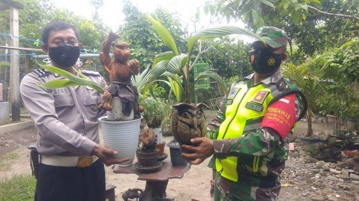 Isi Waktu Luang Saat Pandemi, Anggota Polri di Sleman Berkreasi Membuat Bonsai Kelapa