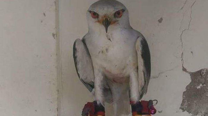 Tahu Burung Yang Dibelinya Masuk Jenis Satwa Yang Dilindungi Pria Ini Pilih Serahkan Ke Bksda Tribun Jogja