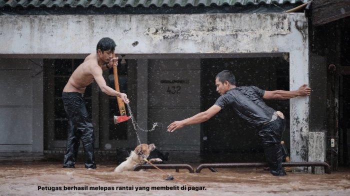 Kisah Anjing Terjebak Banjir Jakarta Dua Jam dengan Kondisi Diikat, Akhirnya Diselamatkan Damkar