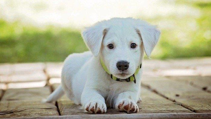 7 Arti Mimpi Versi Primbon Jawa Berkaitan dengan Seekor Anjing