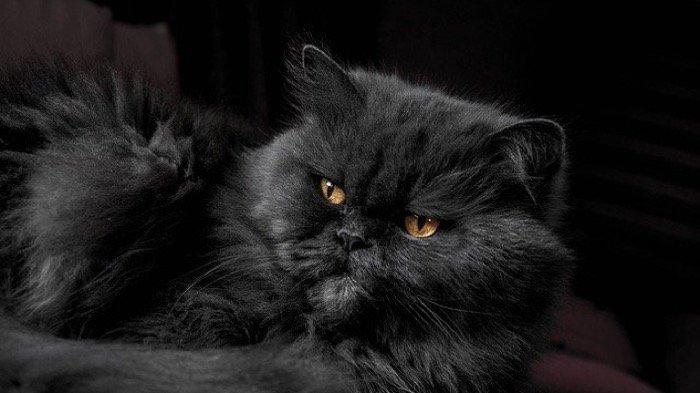 Ini Nama Nama Kucing Yang Unik Dan Lucu Berikut Maknanya Ada Nama Untuk Kucing Jantan Dan Betina Tribun Jogja