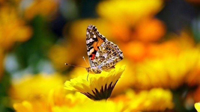 4 Mimpi yang Merupakan Pertanda Perubahan Akan Terjadi Pada Diri Anda, Ada yang Positif dan Negatif