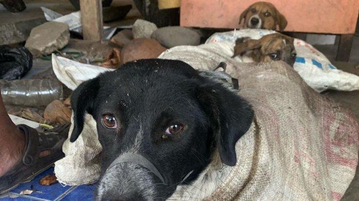 FAKTA Viral Medsos Belasan Anjing Selamat dari Rumah Jagal Bantul, Kondisi Mengenaskan