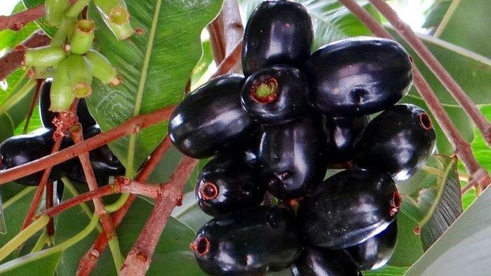6 Obat Herbal Alami yang Dipercaya Efektif Mengobati Diabetes Melitus dan Minim Efek Samping